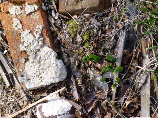 Growth among the ruins from Shalavee.com