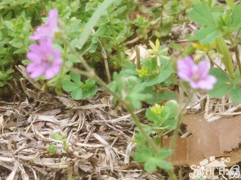 weed flowers from May Brought Spring Flowers on Shalavee.com