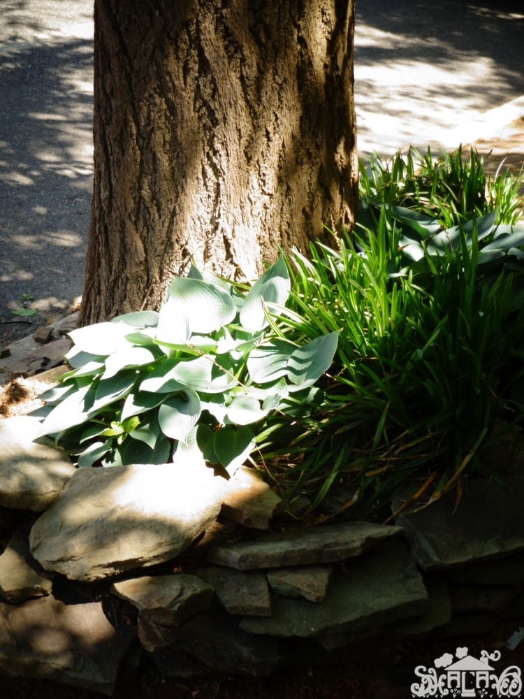 Charming plantings in #Chestertown,MD from Shalavee.com