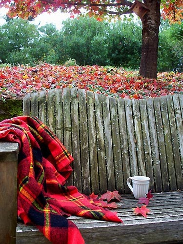 Fall bench with plaid blanket from Shalavee.com