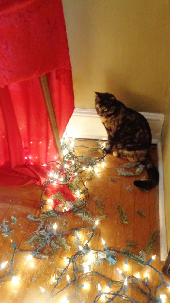 felling the Christmas tree with Chessie on Shalavee.com